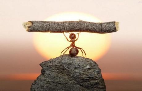 La determinazione che porta al successo